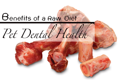 Raw Diet and Pet Dental Health
