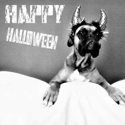 Tail-Waggers CEO Mylo the boxer dressed up as the Naughty Devil for Halloween 2013