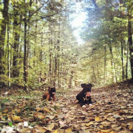Hiking with your dog in the York Region Forest