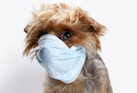 Can Your Dog Get the Flue? } Tail-Waggers