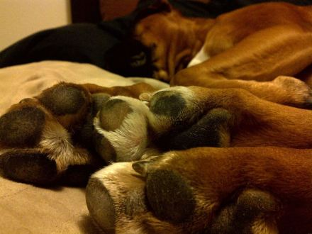 Follow Tail-Waggers dog walkers tips to have your dog's paws healthy this winter.