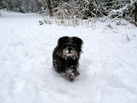 For long haired dogs watch out for snowballs. It can hurt their paws.