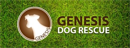 Dog Genesis Rescue Ottawa