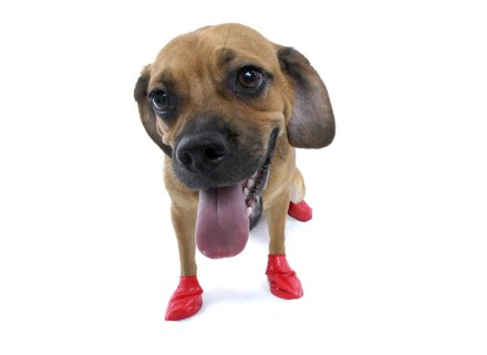Dog Boot Training Your Dog