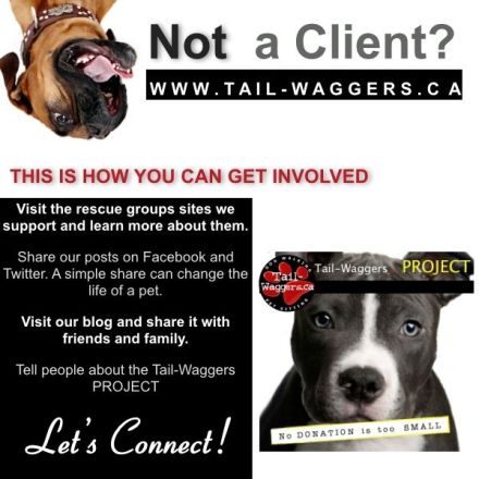 How you can get involved in the Tail-Waggers PROJECT.