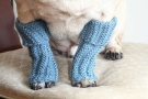If the dog is not into things around his neck, what about some sassy leg warners. You can use children socks . Cut the tip and adjust them to the length of your dog's legs.