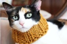 It is not only about the dogs. For the kitty put on a scarf, even if it is just take a picture.