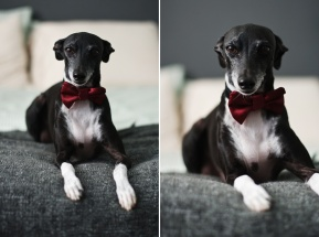 Bow Tie for Dogs. A perfect touch to any special occasion.