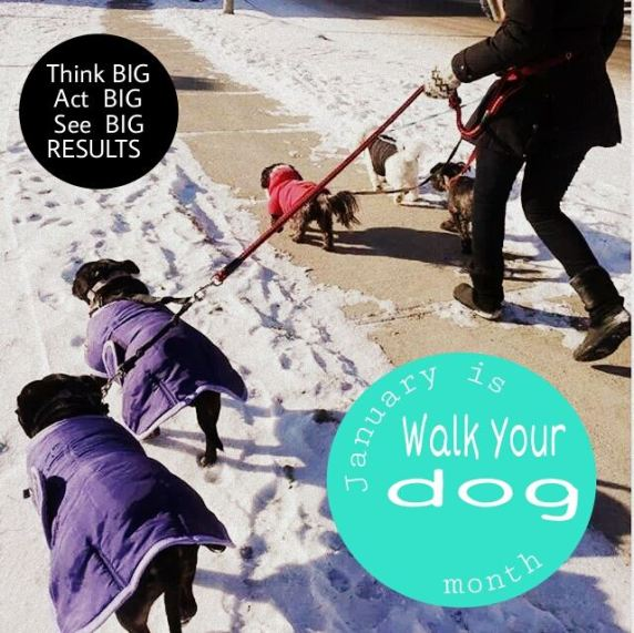 Group Dog Walks in Aurora with Tail-Waggers Team. Celebrating January is Walk Your Dog Month!