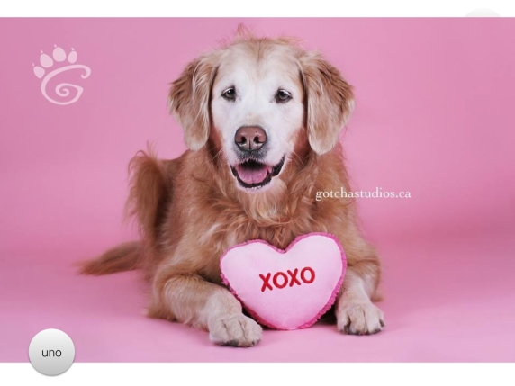 Valentine Holiday Gift Guide . Pet session by Gotcha! Photo Studio.