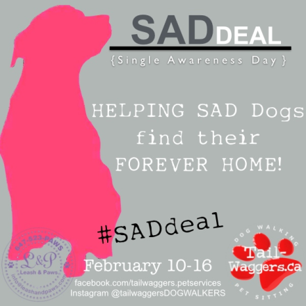 Join a fun event to help SAD DOGS find their forever home}