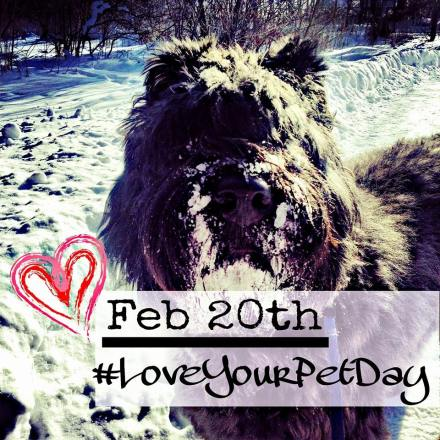 February 20th is #LoveYourPetDay. At Tail-Waggers we ensure is Love Your Pet Day everyday of the year by providing the best pet care possible when out with us dog walking!